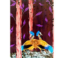 Cranes in the wood Photographic Print