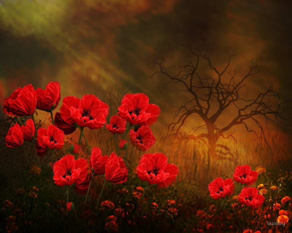 For the Love of Poppies by swaby