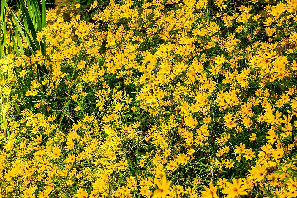 Tickseed Sunflower by Mary Carol Story
