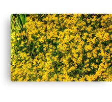 Tickseed Sunflower Canvas Print