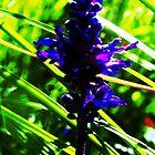 Purple Flower by Squidcake
