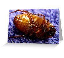 Dead Bug Greeting Card