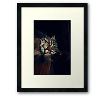 Wildcat Impression Framed Print