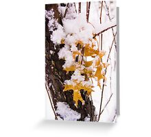 Fall Leaves in Winter Greeting Card