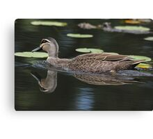 Peaceful Swim ~ Duck ~ Canvas Print