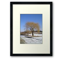 Willow Tree in Winter Framed Print
