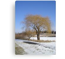 Willow Tree in Winter Canvas Print