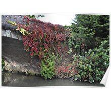 Landscape Red Ivy Poster
