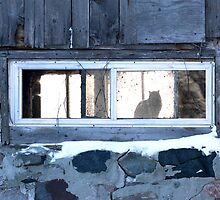The Cat in the Window by philmcdonald
