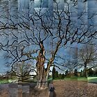 Black Locust, Kew Gardens by cuilcreations