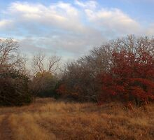 Autumn Field by Paul Sturdivant