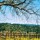 Napa, California by NancyC