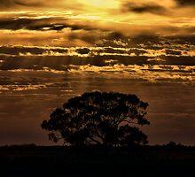 Hay Plains Sunrise by Mark Cooper