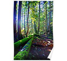 Walk in the Woods in Winter Poster