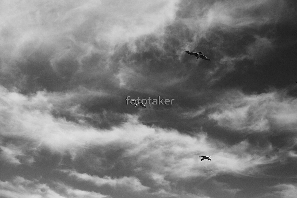 Fly High by fototaker