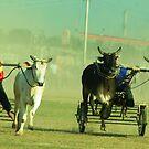 The last lap by Dr. Harmeet Singh