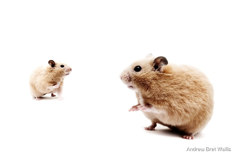 Hamster Hi Five. by Andrew Bret Wallis