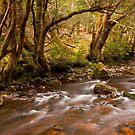 Pencil Pine Creek by Tim Wootton