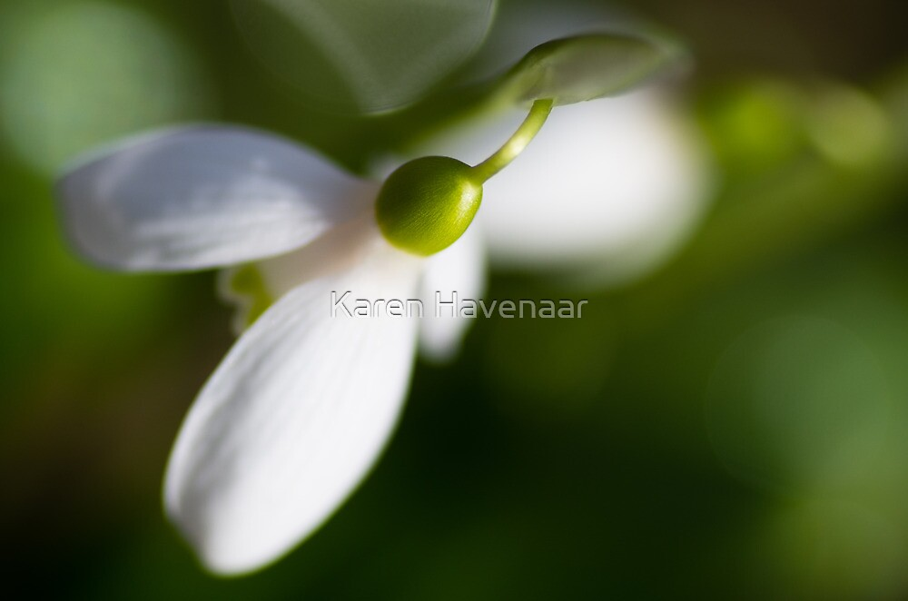 White & Green by Karen Havenaar