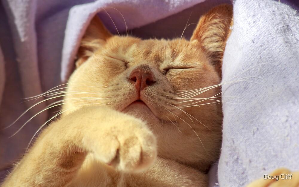 sleep well by Doug Cliff