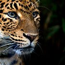 Chinese Panther by Louise Fahy
