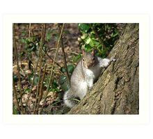 Grey Squirrel Art Print