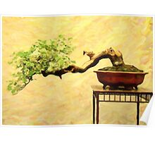 bonsai in art form acrylic Poster