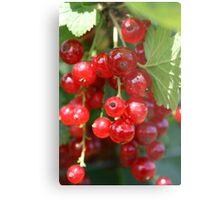 Fruit Picking Metal Print