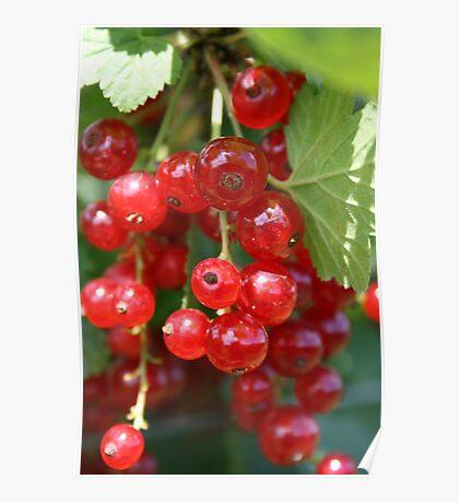 Fruit Picking Poster