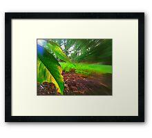 Forest. Framed Print