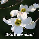 Christ is Risen Indeed! by Paula Tohline  Calhoun