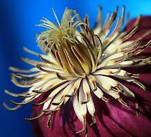 Heart of the Flower by Marija