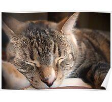 Sleeping Kitty_2 Poster