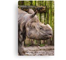 One Horned Rhino Canvas Print