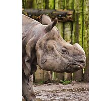 One Horned Rhino Photographic Print