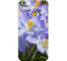 Crocus Flowers iPhone Case/Skin