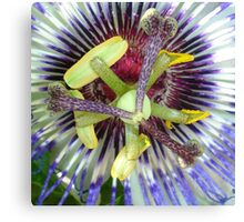 Passion Flower Close Up Canvas Print