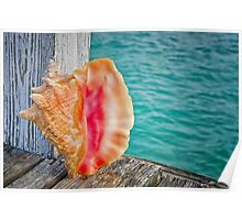 Conch Shell on Dock Poster
