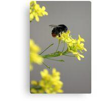 Little Bumblebee Canvas Print