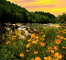 Buttercups  River Yellow Sky by Randy Branham
