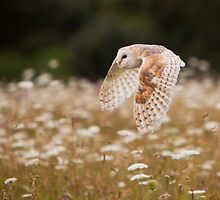 Barn Owl by Karl Thompson
