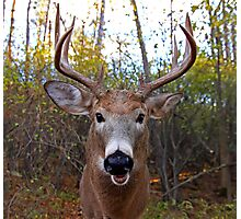 Wide-Angled Buck - White-tailed deer Photographic Print