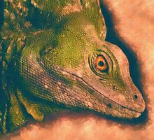 Green Basilisk Lizard by Adam Asar