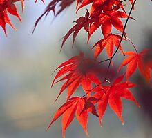 Japanese Maple iPhone cover cell phone photo cover custom by RobTravis