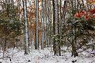 Arkansas Wintering Stix by NatureGreeting Cards ©ccwri
