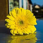 Yellow flower with water droplets by saabbhoy
