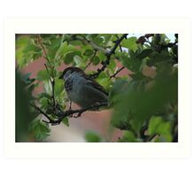 Hiding Sparrow Art Print