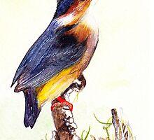 Malachite Kingfisher / Alcedo cristata by marietjie