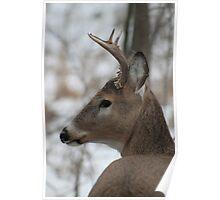 Deer Poster