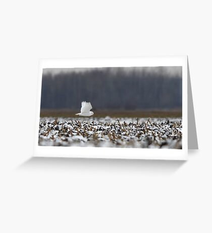 Ghost - Snowy Owl Greeting Card